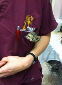 FACE wellness clinic staff with pocket kitten