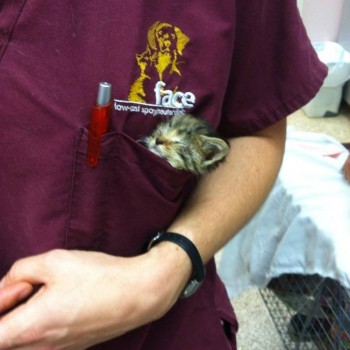 FACE vet staff with pocket kitten
