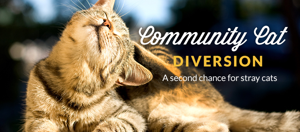 Community Cat Diversion