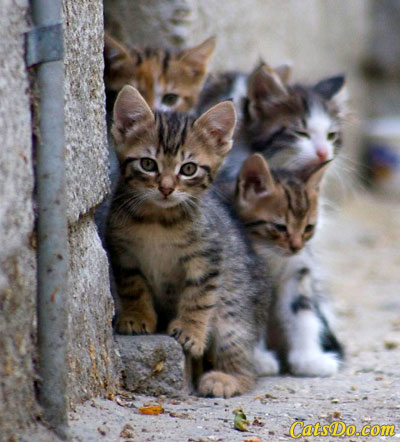Face Low Cost Spay Neuter Clinicwhat Is A Community Cat