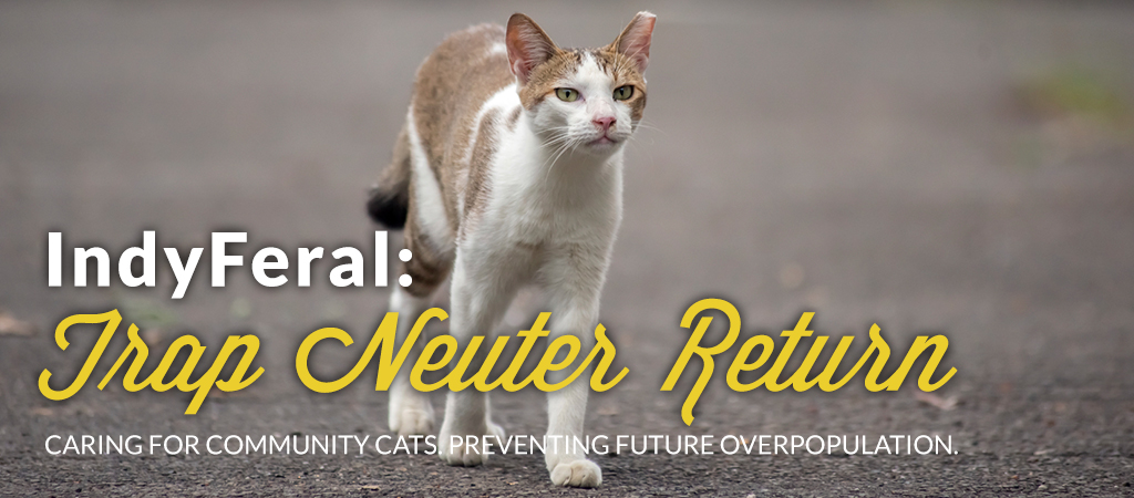 Face low cost spayneuter clinichome face low cost spayneuter tnr sciox Image collections