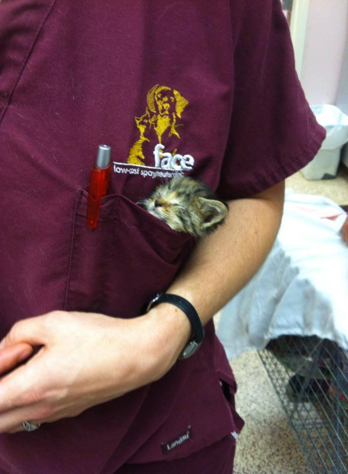 Face Low Cost Spay Neuter Clinicclinic Face Low Cost Spay Neuter