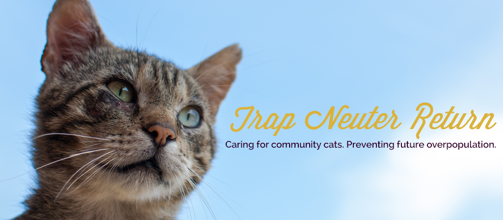 Face Low Cost Spay Neuter Clinichome Face Low Cost Spay Neuter Clinic