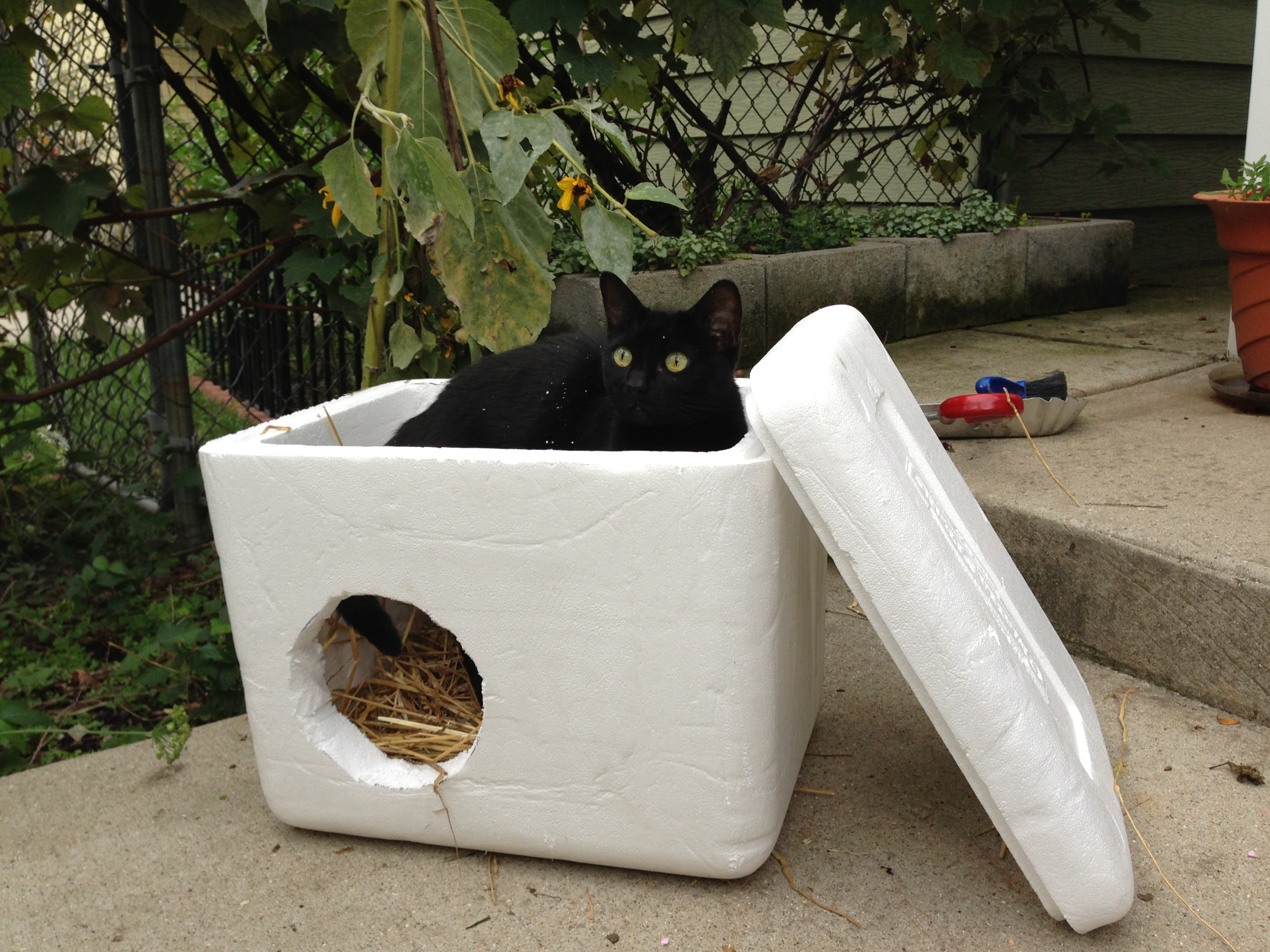 Donate Styrofoam For Feral Cat House