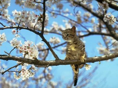 Cats on Trees — Wikipédia