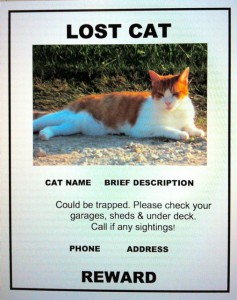 Lost-Cat-Flyer-flier-example