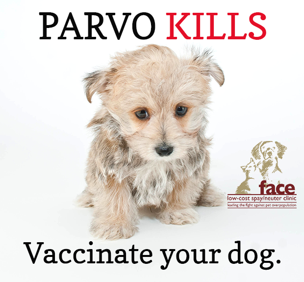 how many parvo vaccines does my dog need