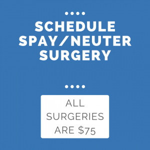 Click here to schedule surgery.